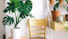 Top 8 Indoor Plants You Can Grow This Winter Season